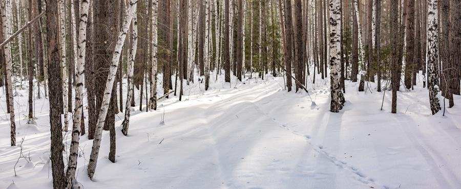 Deer tracks in snow