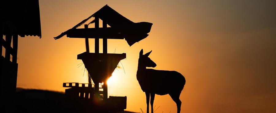 Deer at a deer feeder