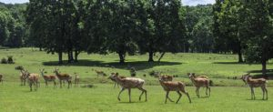 Deer herd in a field